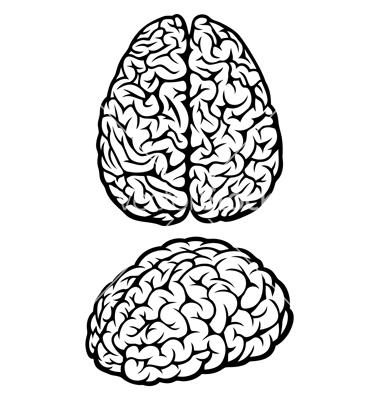 Brain vector on VectorStock®.
