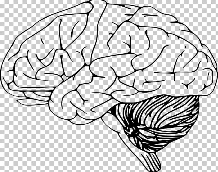 Outline Of The Human Brain PNG, Clipart, Artwork, Black And White.