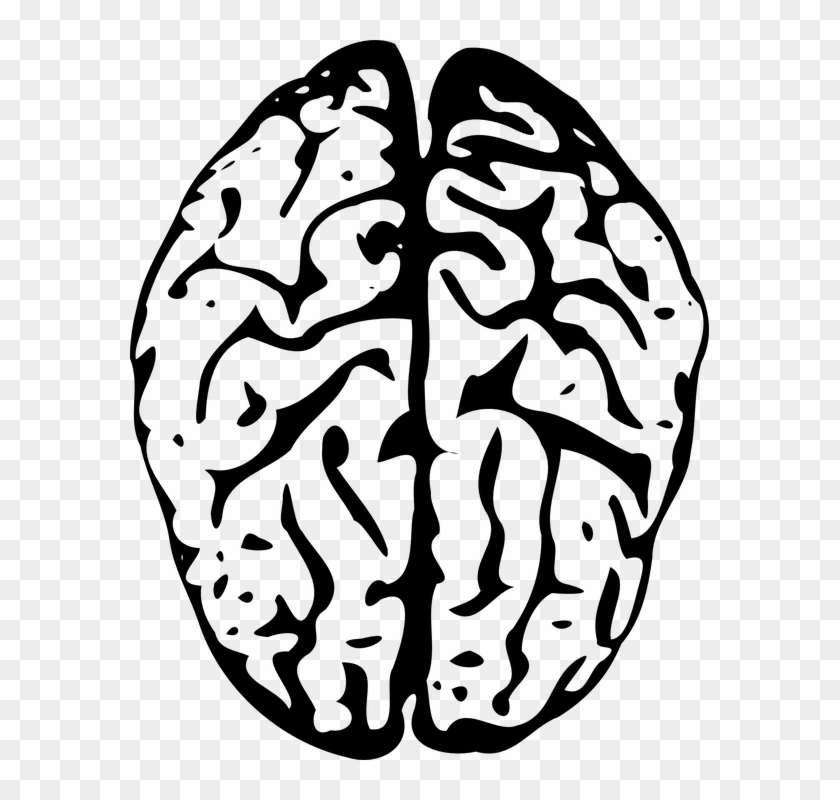 Brain Outline Png.
