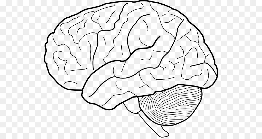 Download Free png Outline of the human brain Drawing Clip art.