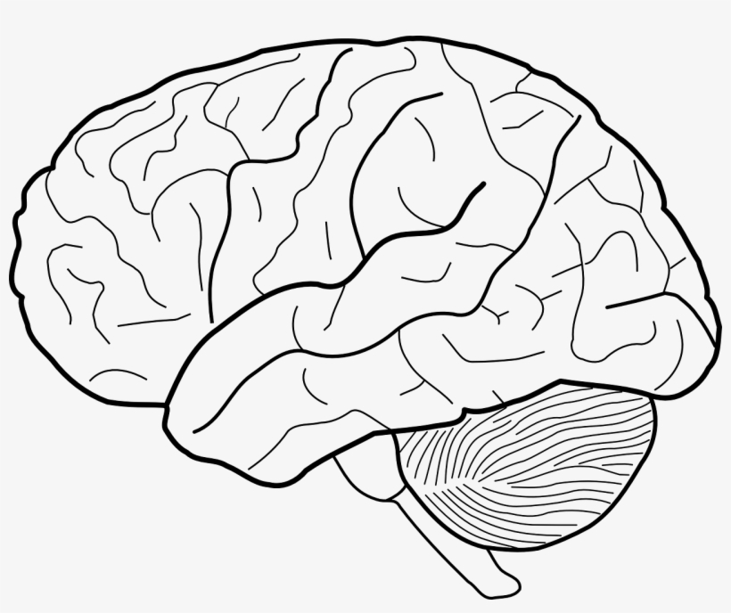 Brains Clipart Clear Background.