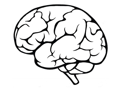 Brain Outline Png (107+ images in Collection) Page 1.