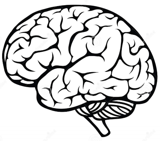Brain Outline Png (107+ images in Collection) Page 2.