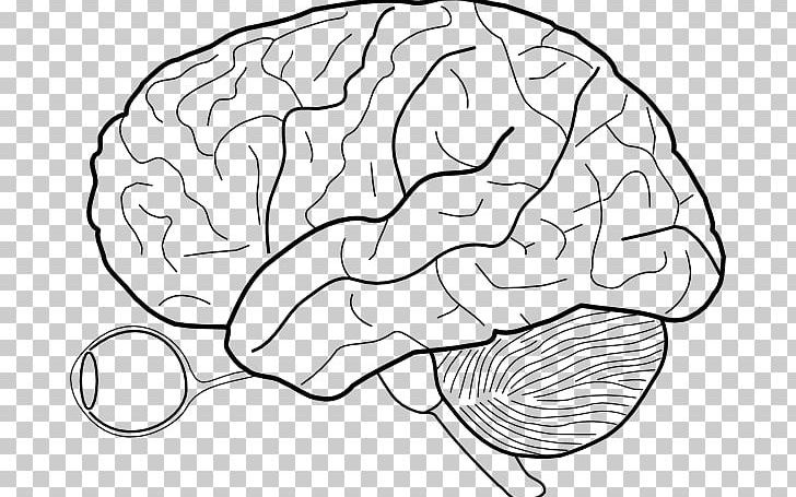 Outline Of The Human Brain Human Body PNG, Clipart, Anatomy, Area.