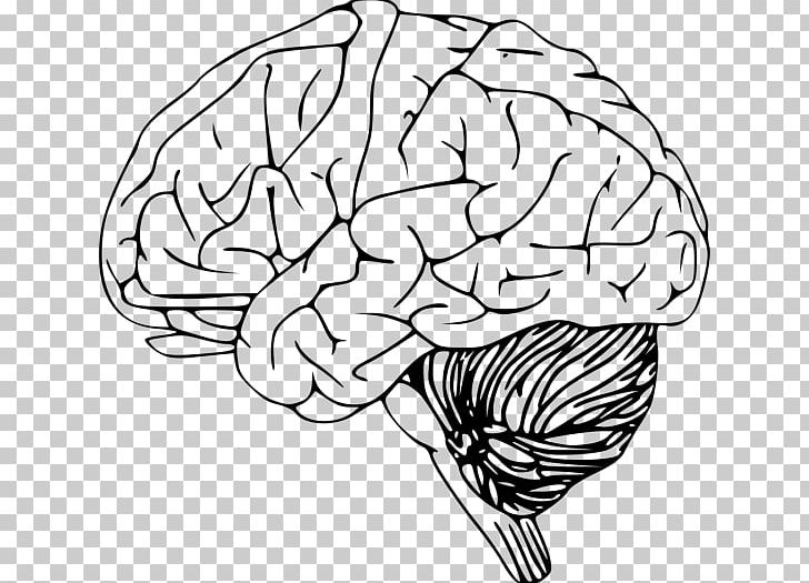Outline Of The Human Brain Drawing PNG, Clipart, Black And White.