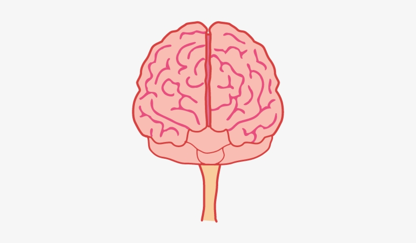 Animated Brain Png.