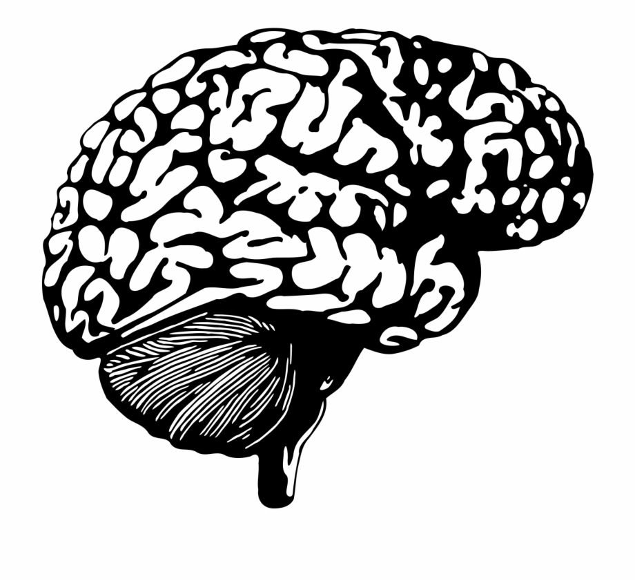 Brain Graphic Png.