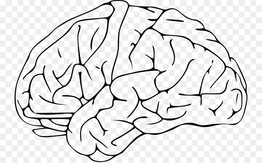 Human Brain Drawing Clip Art.