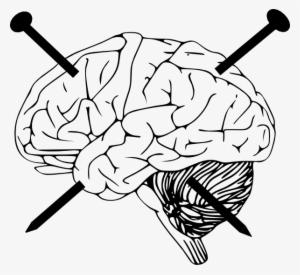 Brain Outline PNG, Free HD Brain Outline Transparent Image.