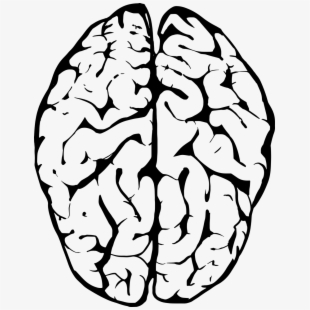 Human Brain Clipart Png PNG Images.