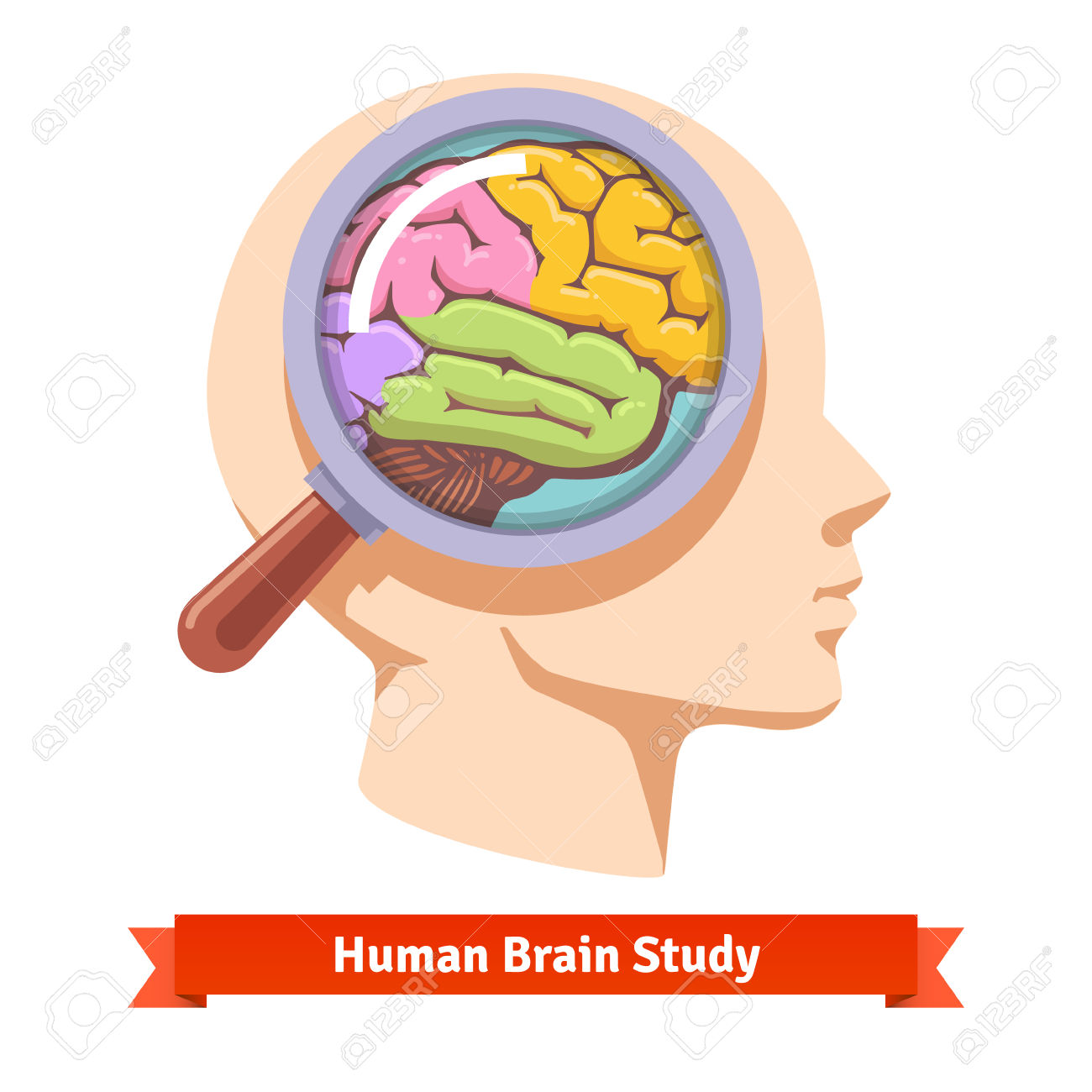 Clipart body with brain.