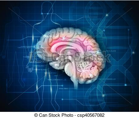 Vector of Human Brain research abstract scientific background with.