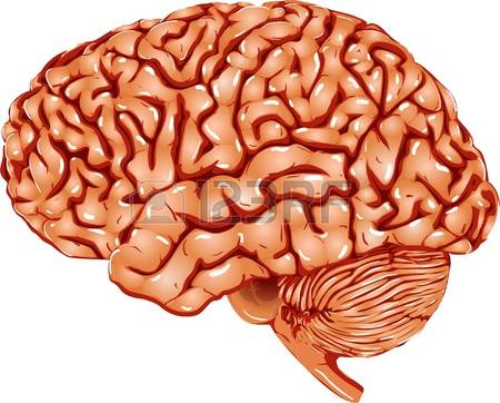 7,212 Brain Research Stock Illustrations, Cliparts And Royalty.