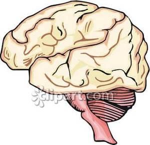and Brainstem.
