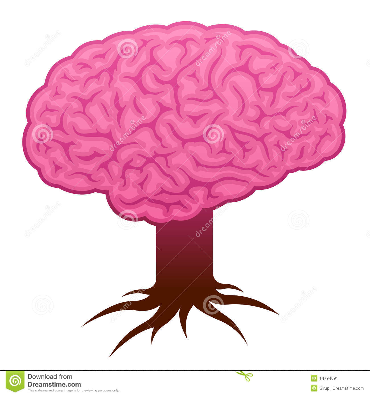 Brain Stem / Cerebellum / Optical Nerve / Female Brain Anatomy.