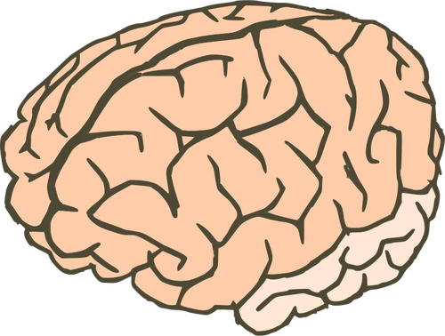 Vector clip art of human brain in 2 colors.