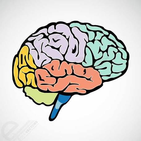 Human Brain Clipart Picture Free Download.