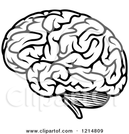 Brains clipart.