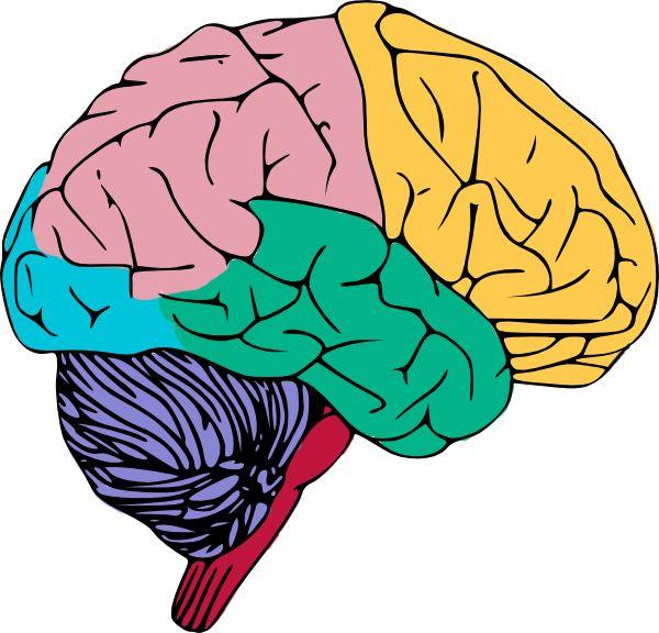 Free to Use & Public Domain Brain Clip Art.