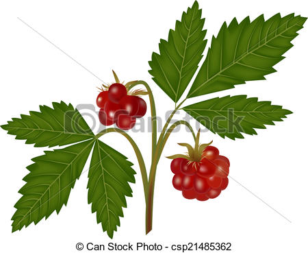 Bramble Illustrations and Clip Art. 182 Bramble royalty free.