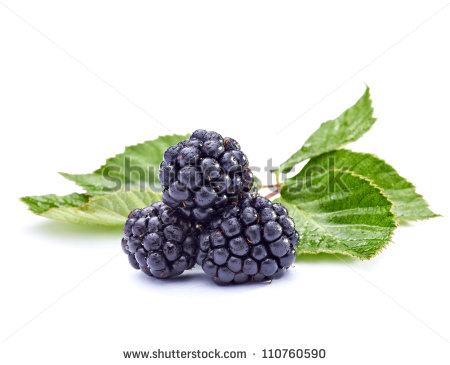 Close Up Of Bramble Fruit Stock Photo 110760590 : Shutterstock.