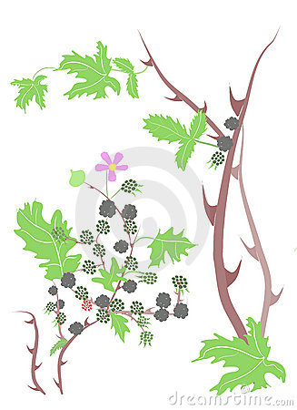 Bramble Stock Illustrations.