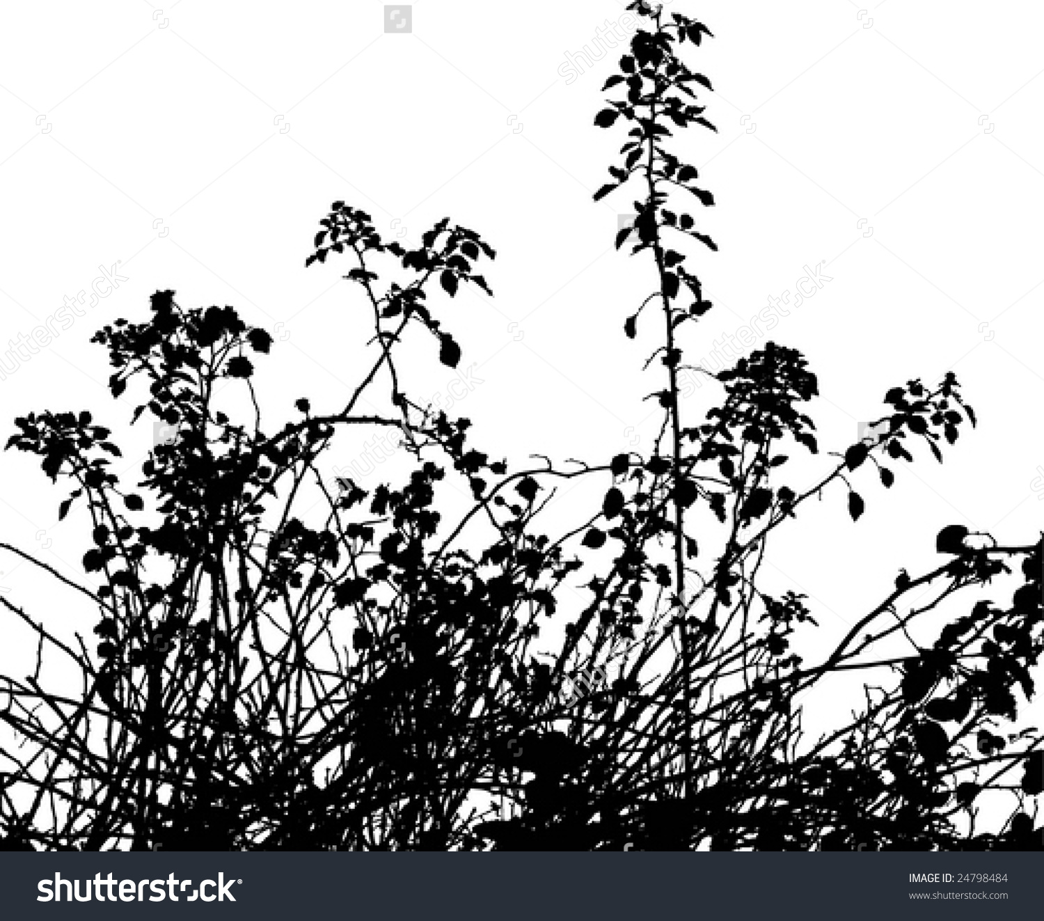 Bramble thorns silhouette clipart.
