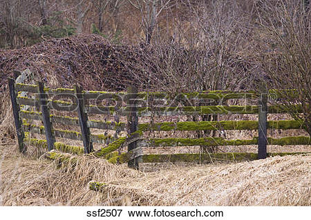 Picture of Mossy fence entangled in brambles, Colony Farm Regional.