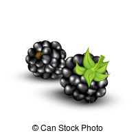 Brambles Illustrations and Clip Art. 182 Brambles royalty free.