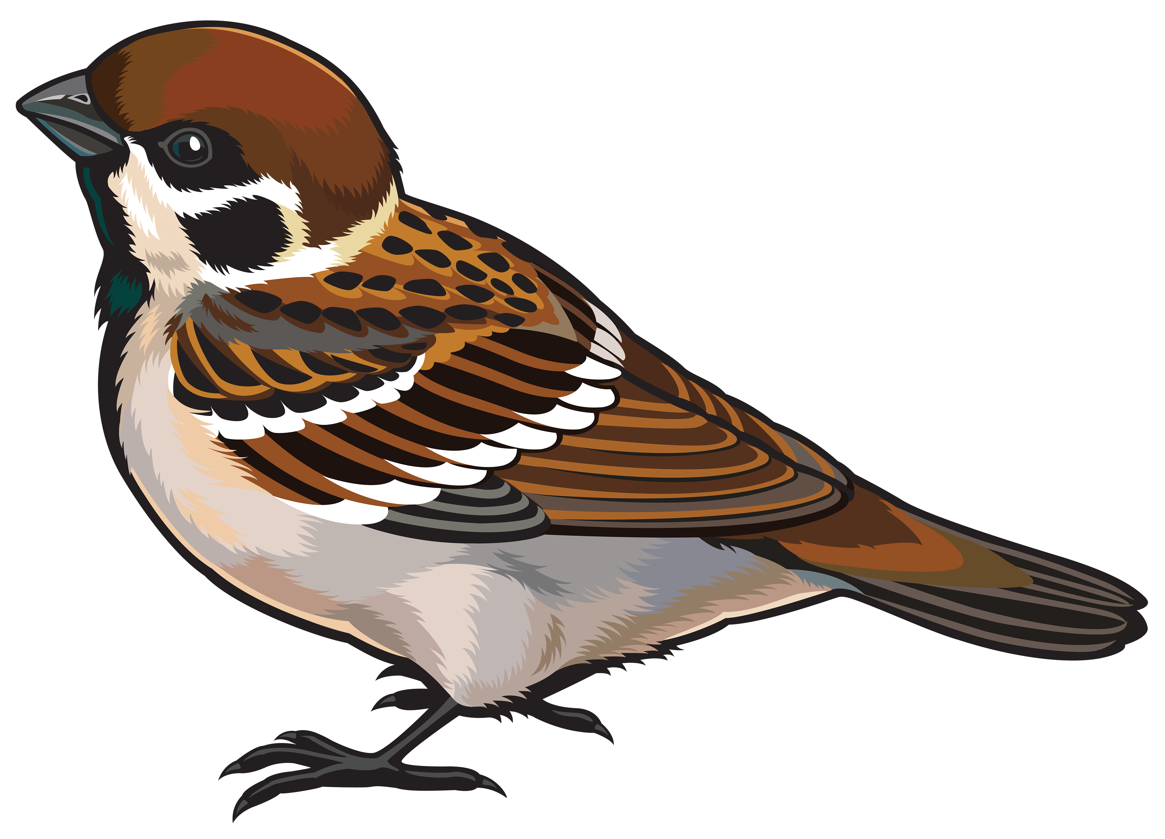 Sparrow PNG Clipart.