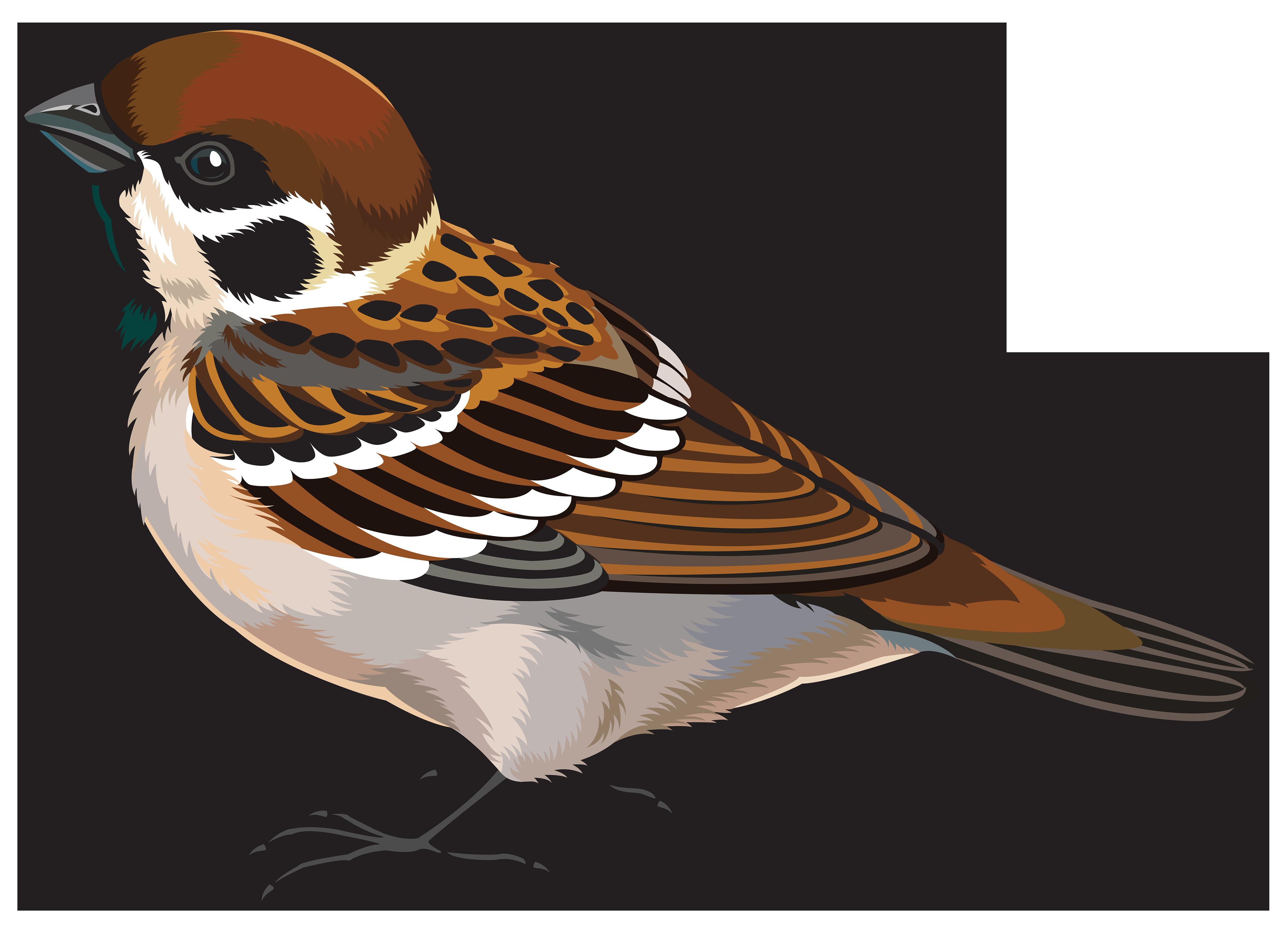 sparrow clipart clipground quail clip art black white quail clip art coloring