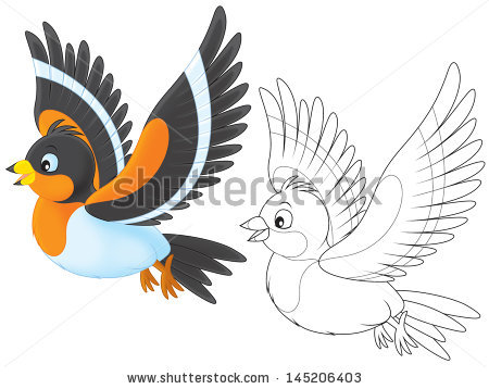 Brambling Bird Stock Photos, Royalty.