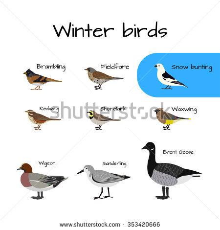 Brambling Bird Stock Vectors & Vector Clip Art.