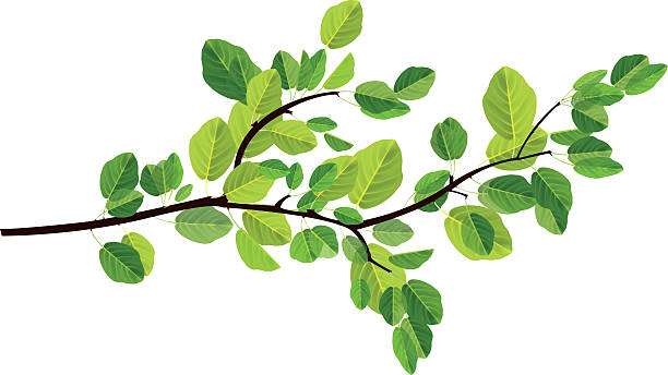 Best Branch Illustrations, Royalty.