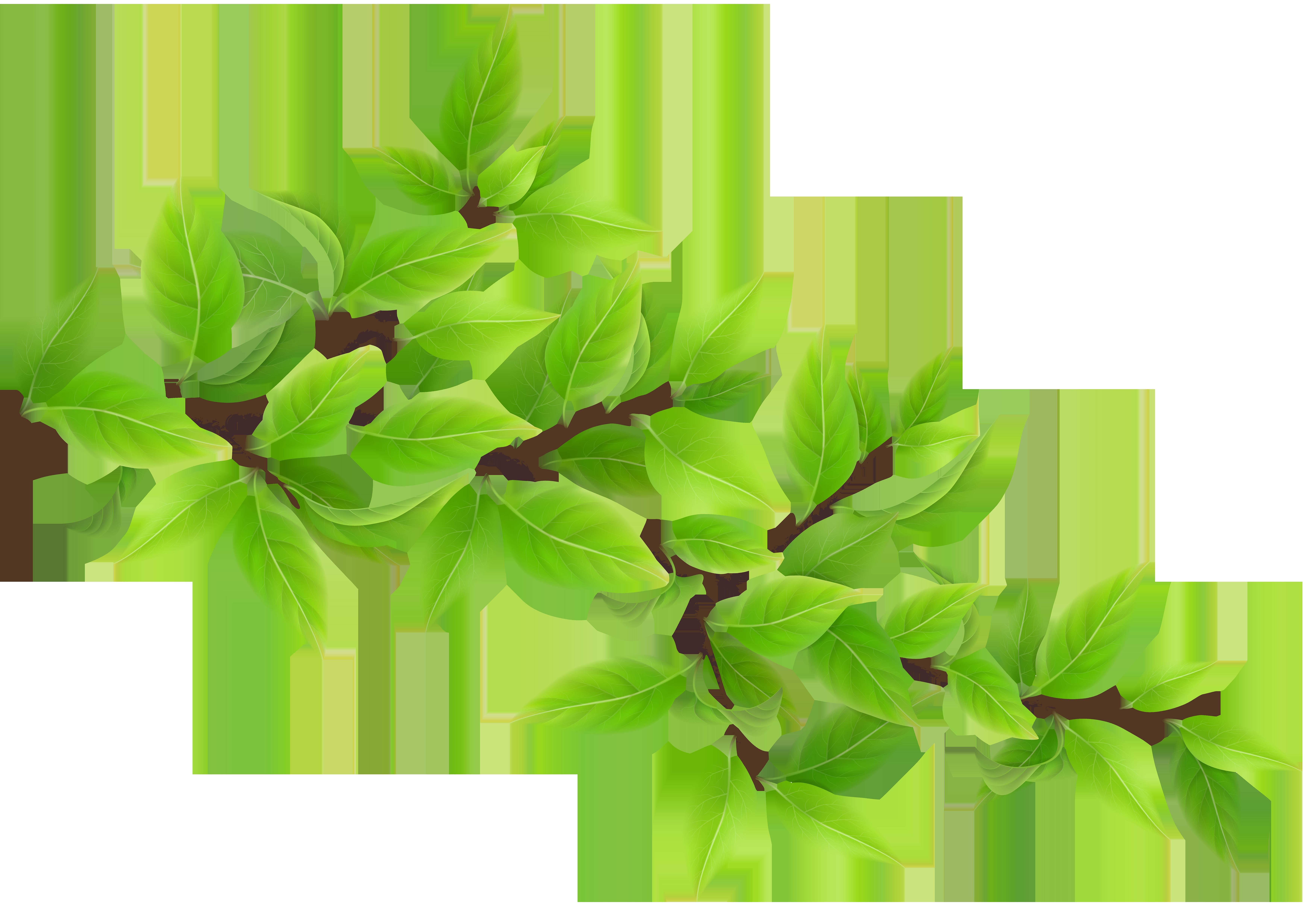 Green Branch Transparent PNG Clip Art Image.
