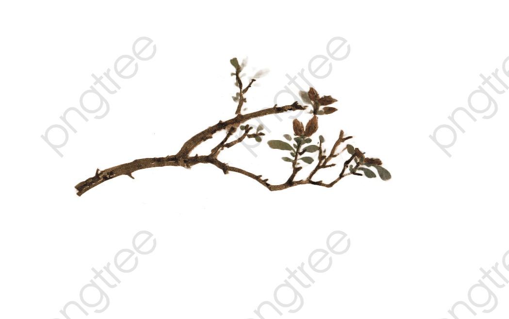 Branch Tree Branches, Tree Clipart, Branch Clipart, Branches PNG.