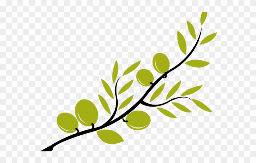 Branch Clipart Olive Branch.