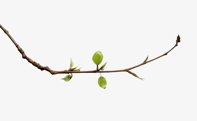 A Slender Branch; A Budding Branch, Branch Clipart, Green, Spring.