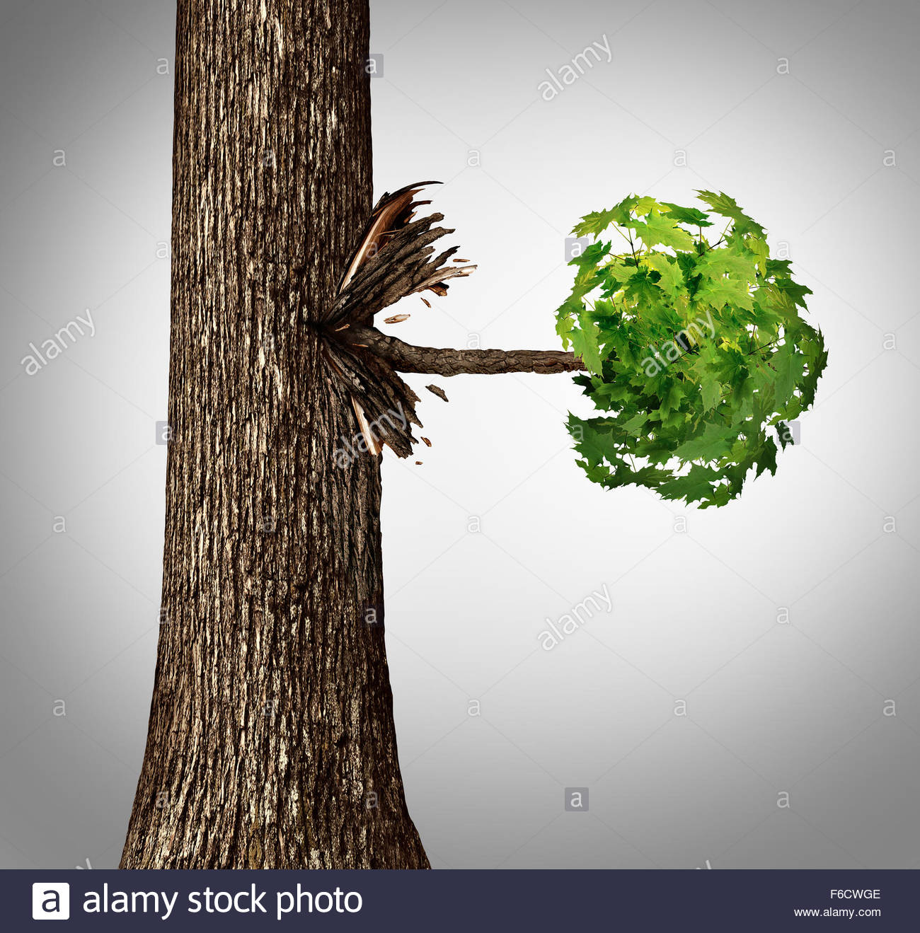 Outgrowth Stock Photos & Outgrowth Stock Images.