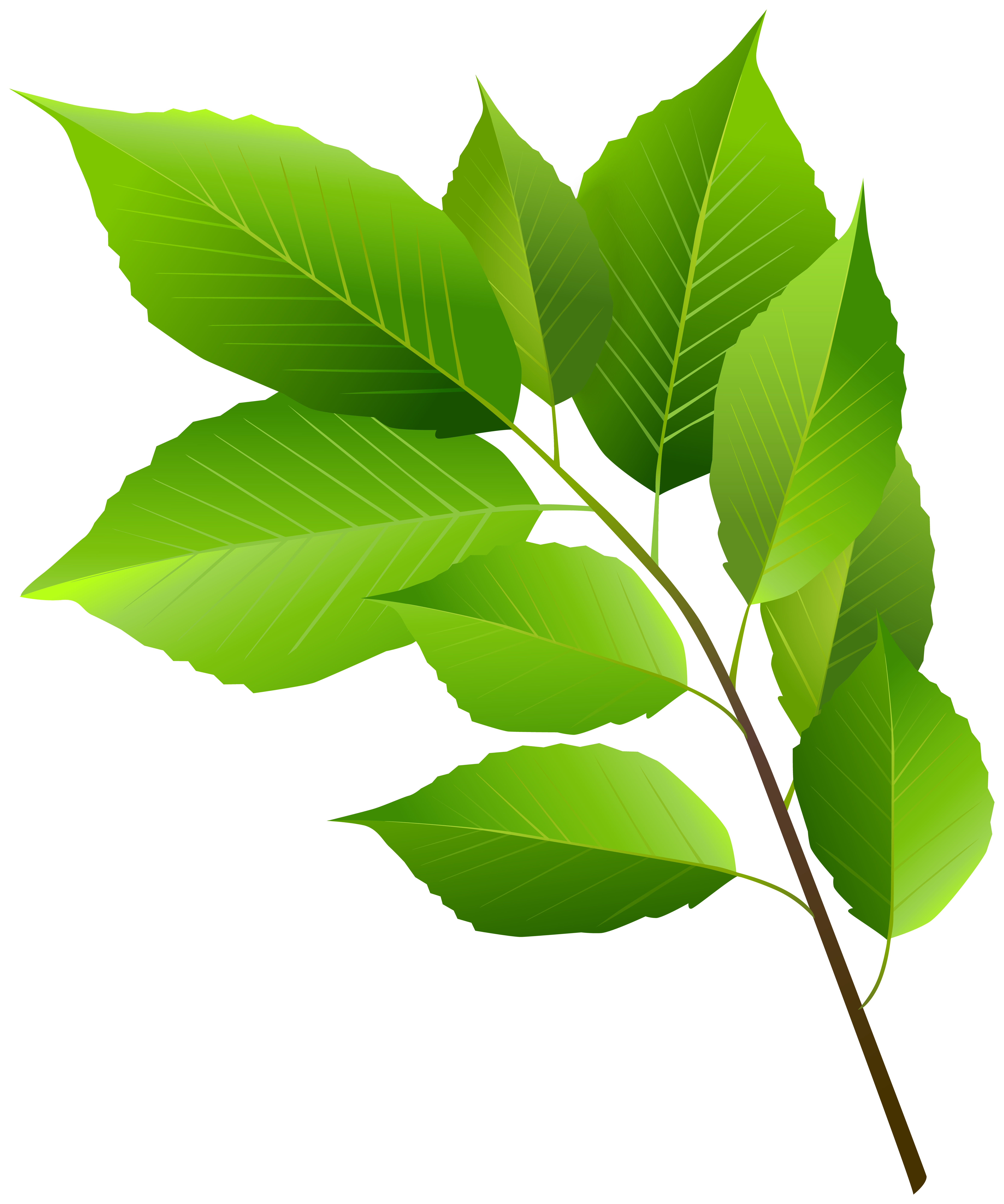 Spring Branch with Green Leaves Clipart Image.