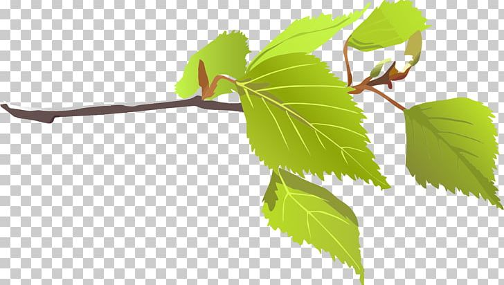 Branch Leaf Tree PNG, Clipart, Big Leaves Cliparts, Branch, Color.