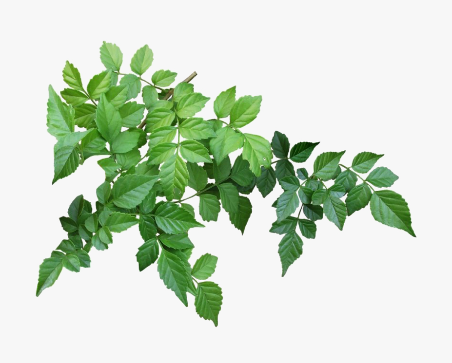 Green Leaves Png Clipart.