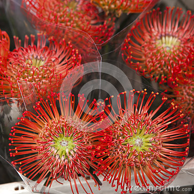 Protea Flowers On A Farmers Market Stock Photography.