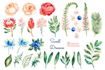 Photos, illustrations et vidéos de protea.