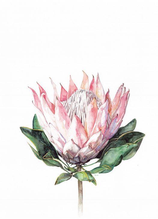 1000+ ideas about King Protea on Pinterest.