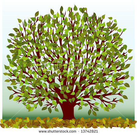 Vector sycamore tree free vector download (4,751 Free vector) for.