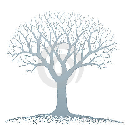 Bare Tree Silhouette Stock Illustrations.