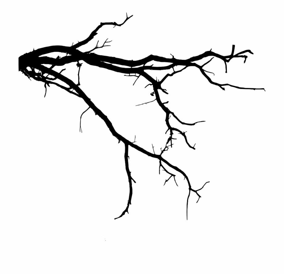 Drawing Branches Tree Limb.