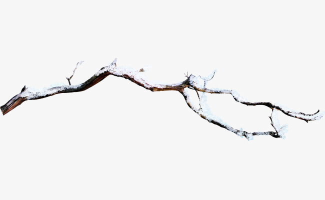 Branch Png & Free Branch.png Transparent Images #10010.