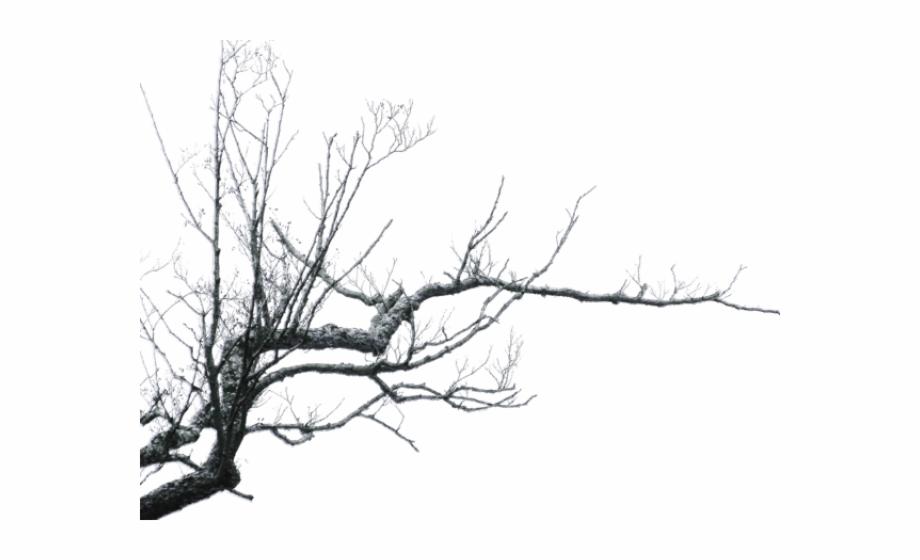 Branch Png Transparent Images.